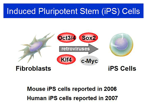 induced pluripotent stem cells applied